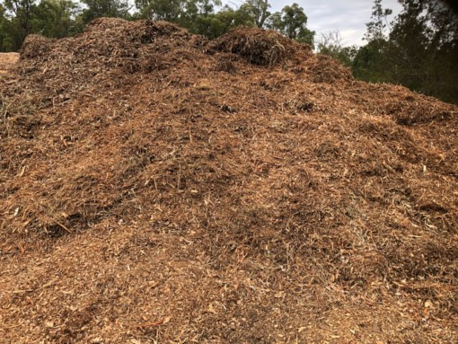 Arbor Mulch - field before clearing