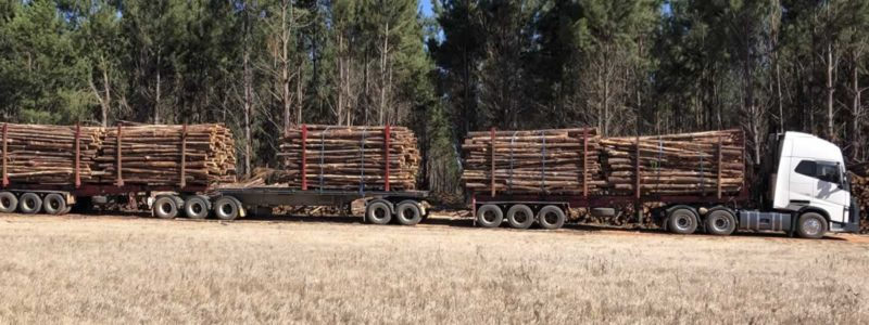 banner log timber markets