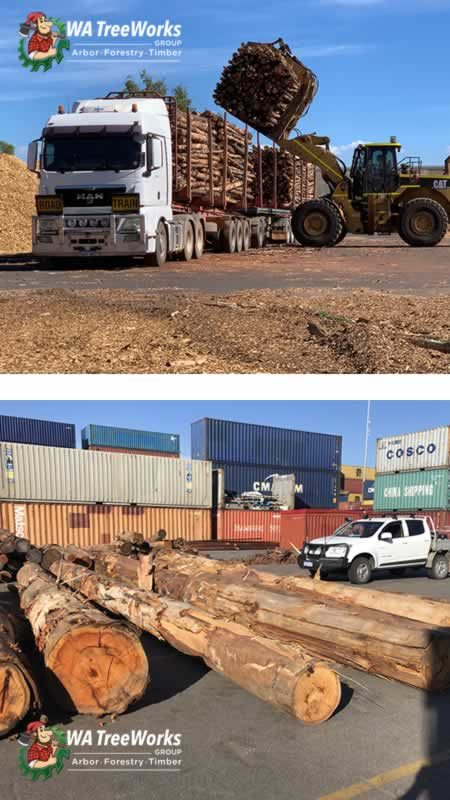 photo logtimber markets