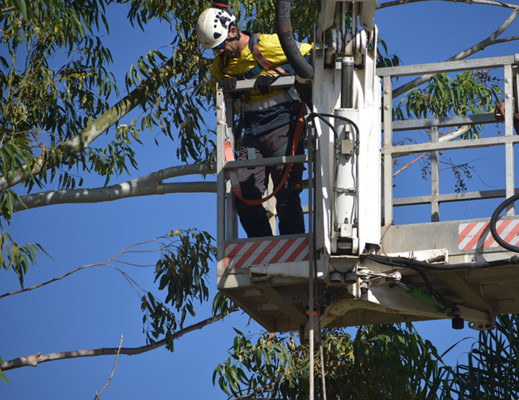 WA TreeWorks Cherry Picker 7a