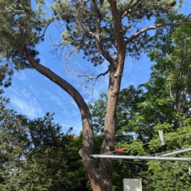 Gosnells Dangerous Tree requires lopping